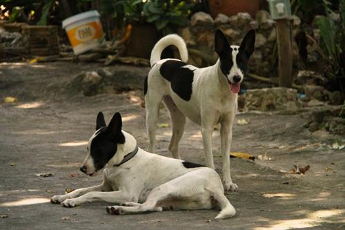 La-Otra-Cuesta-Perros-Gemelos