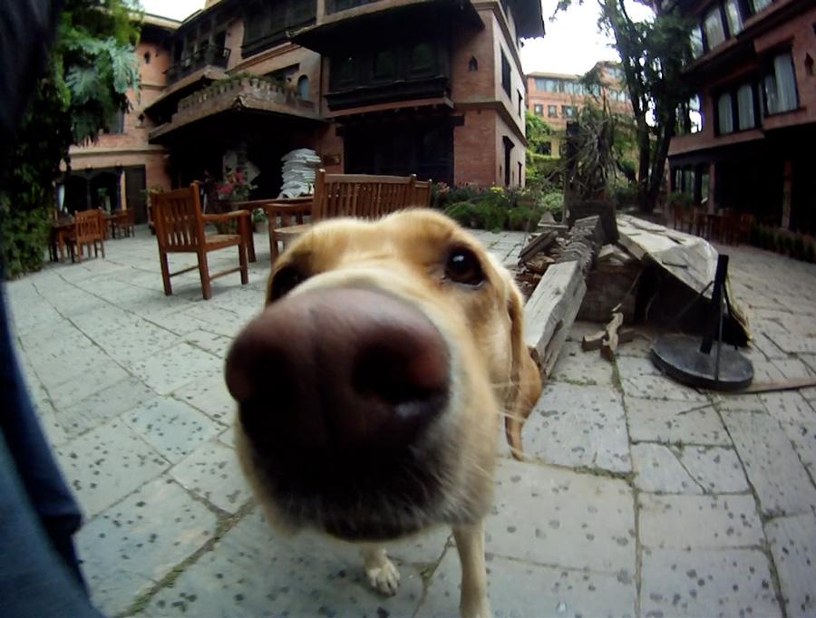 Muzzles-dog
